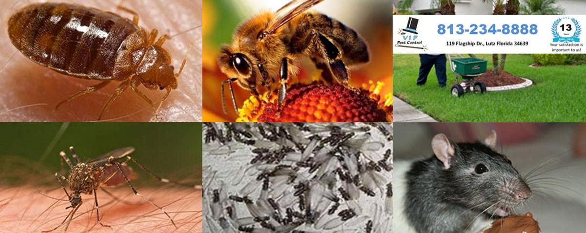 Got Pest?    813-234-8888